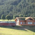 Turf roof2